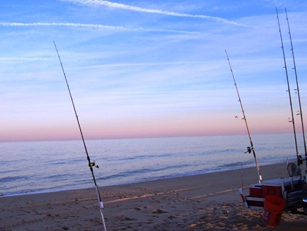 Home delaware mobile surf fisherman club for Surf fishing virginia beach